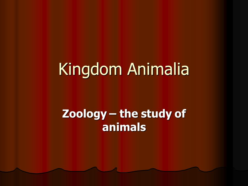 Image of: Plantae Kingdom Animalia Zoology The Study Of Animals Slideplayer Kingdom Animalia Zoology The Study Of Animals Summary Animals Are