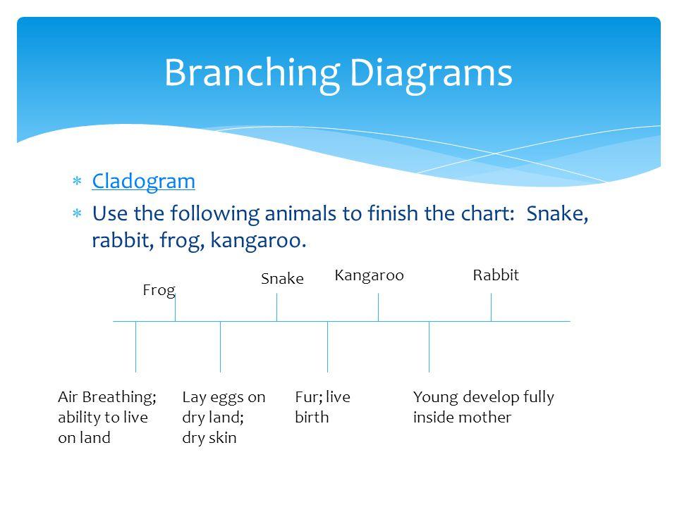 Branching Frog Diagram Free Car Wiring Diagrams