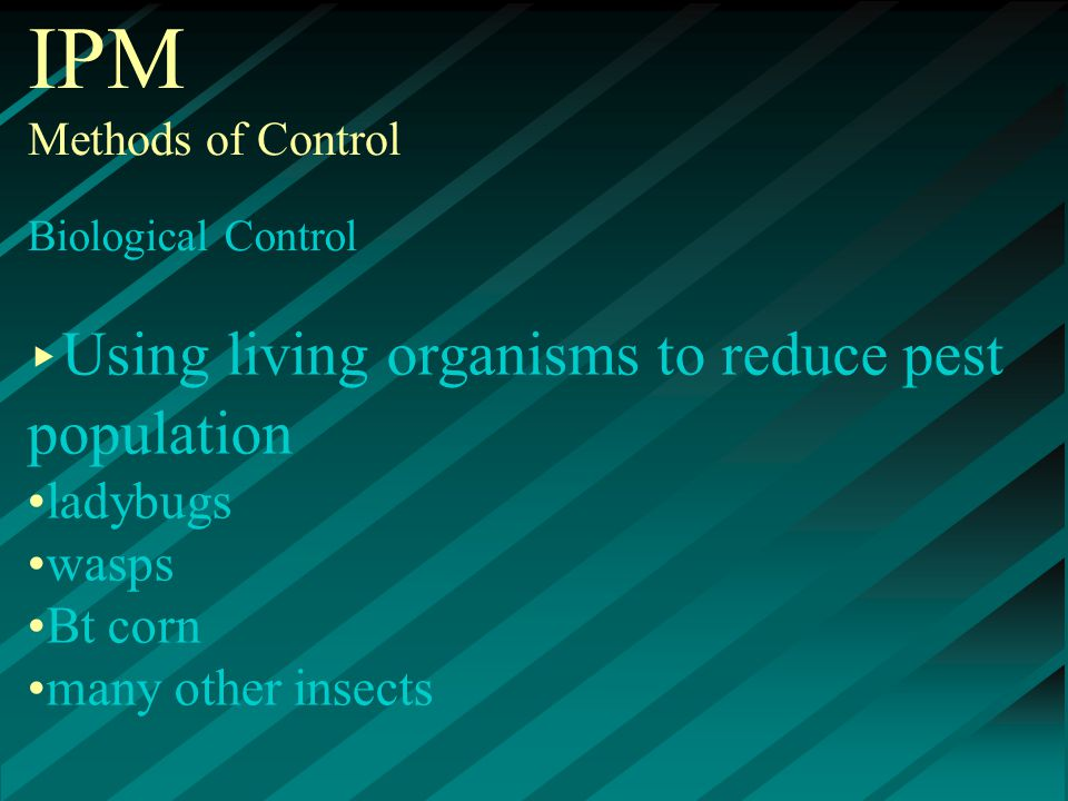 IPM Methods of Control Biological Control ▸ Using living organisms to reduce pest population ladybugs wasps Bt corn many other insects