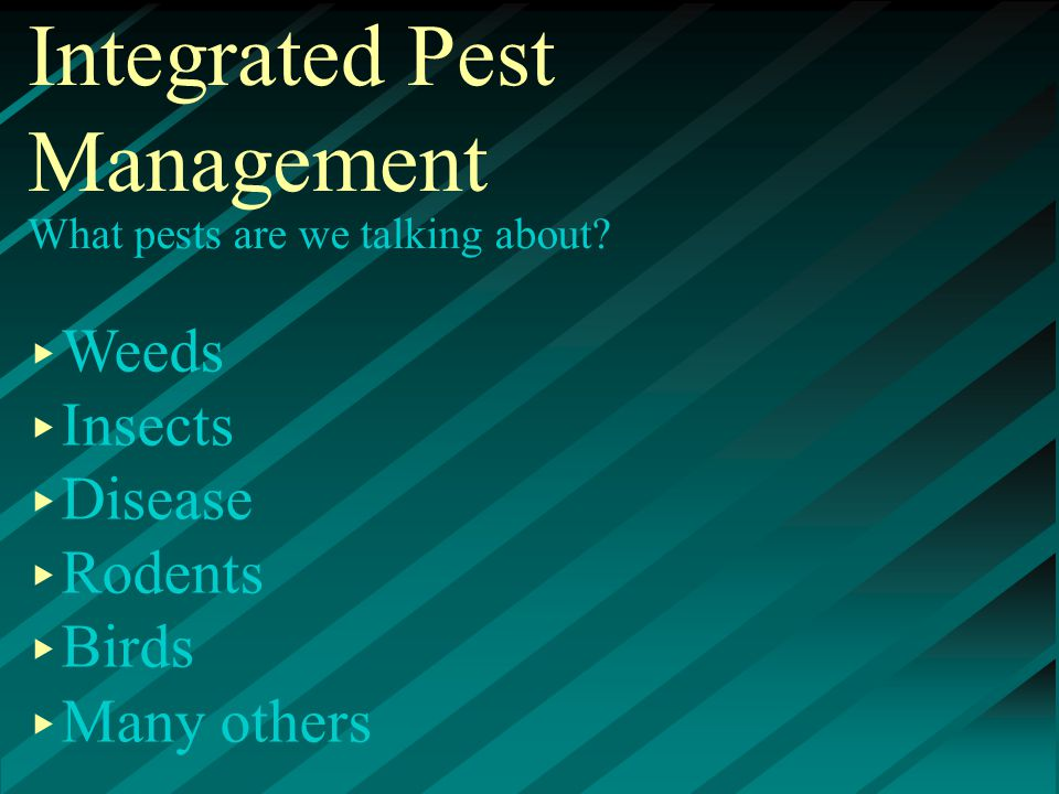 What pests are we talking about ▸ Weeds ▸ Insects ▸ Disease ▸ Rodents ▸ Birds ▸ Many others