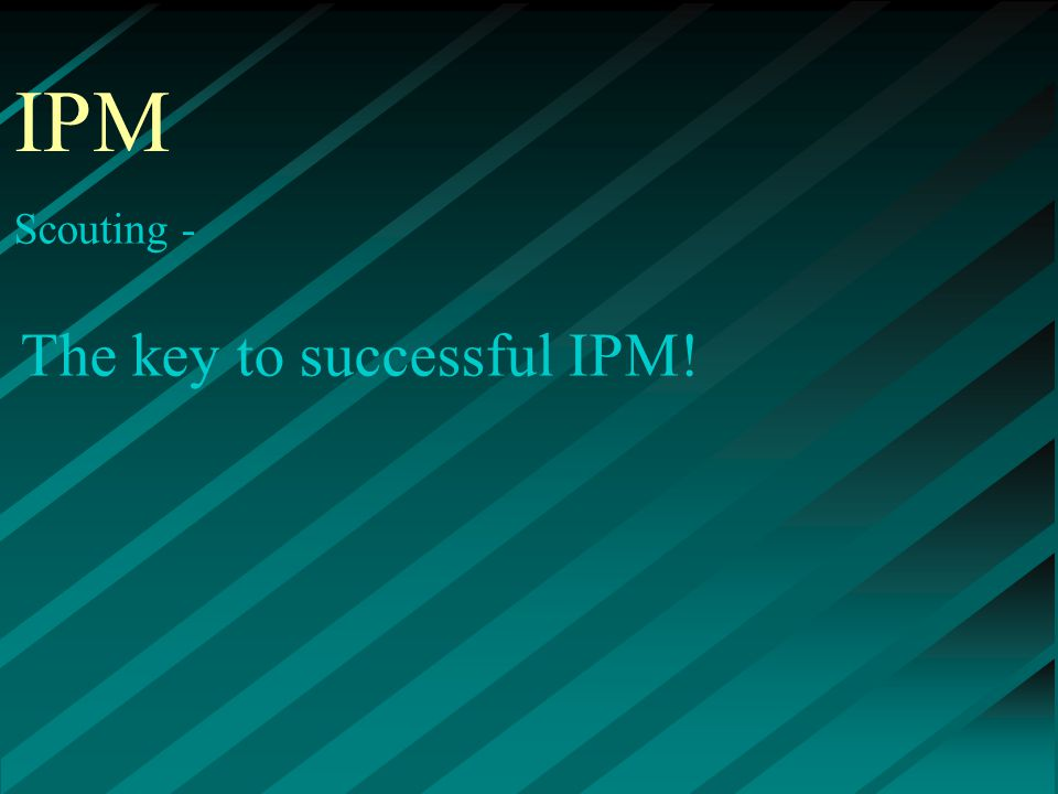 IPM Scouting - The key to successful IPM!