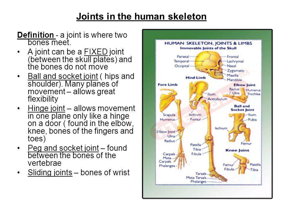 Bones In The Human Skeleton Functions Of The Skeleton Bone Marrow