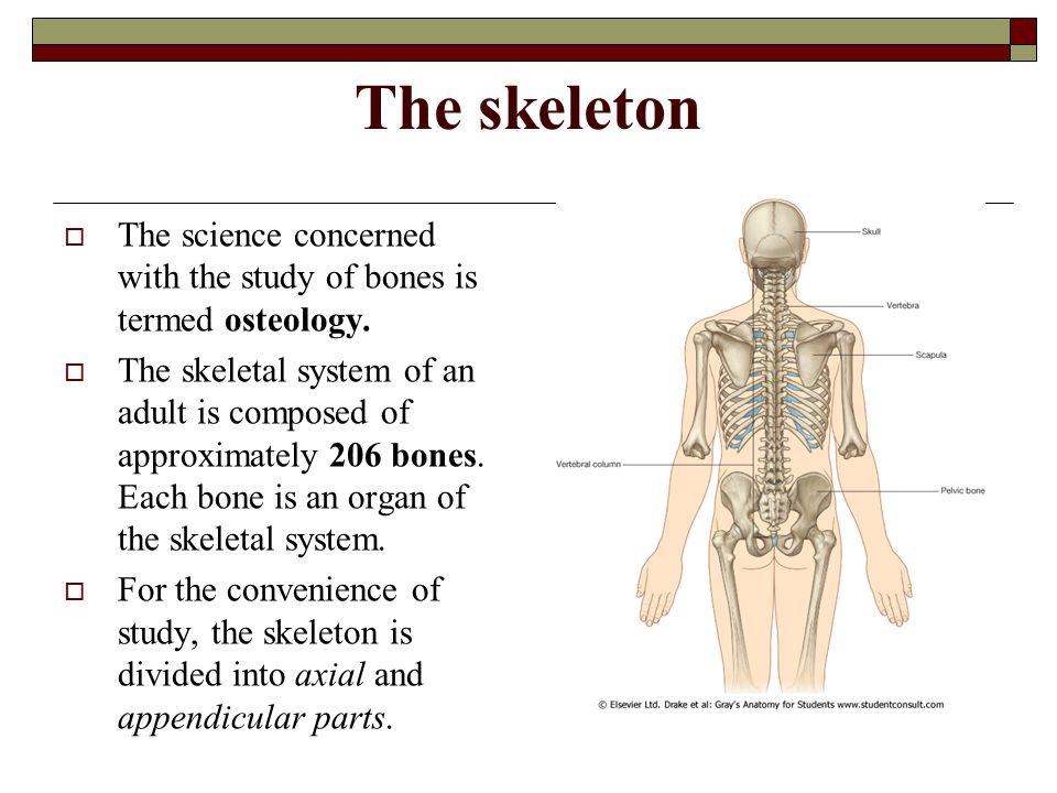 General Osteology Human Anatomy Department Dr Angela Babuci Ppt