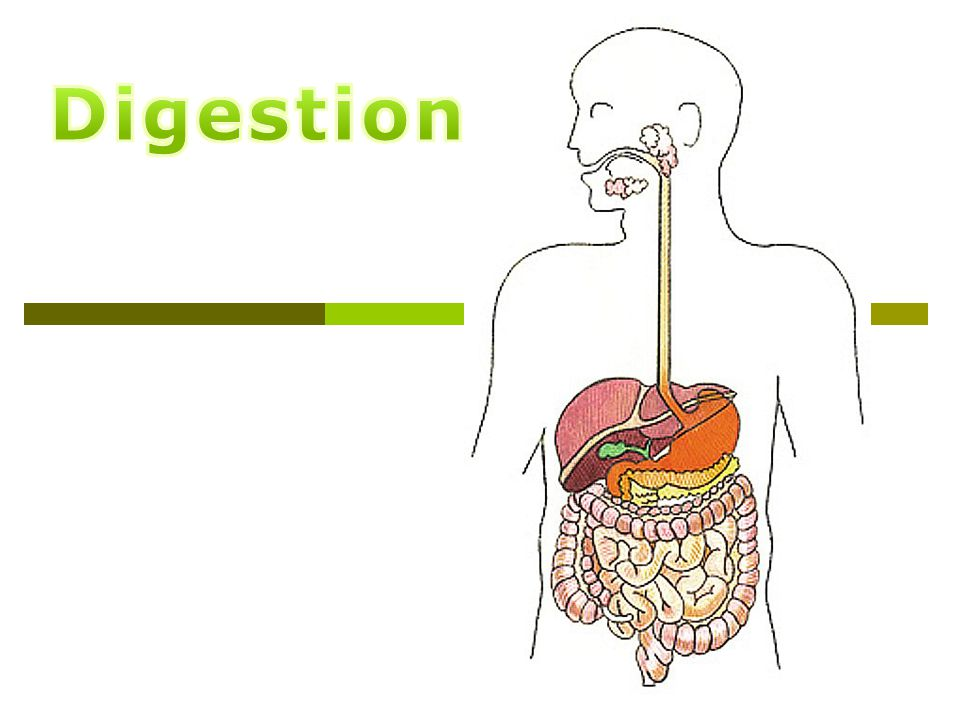 How do we get from this… …to this. Digestive System Parts  Mouth ...