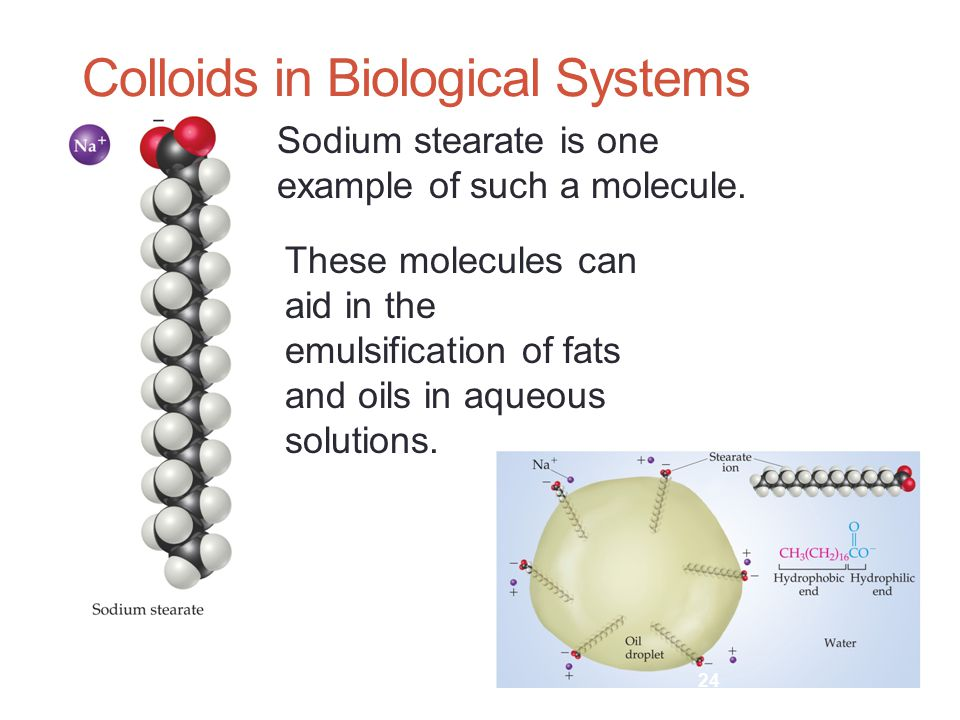 Colloids in Biological Systems Sodium stearate is one example of such a molecule.