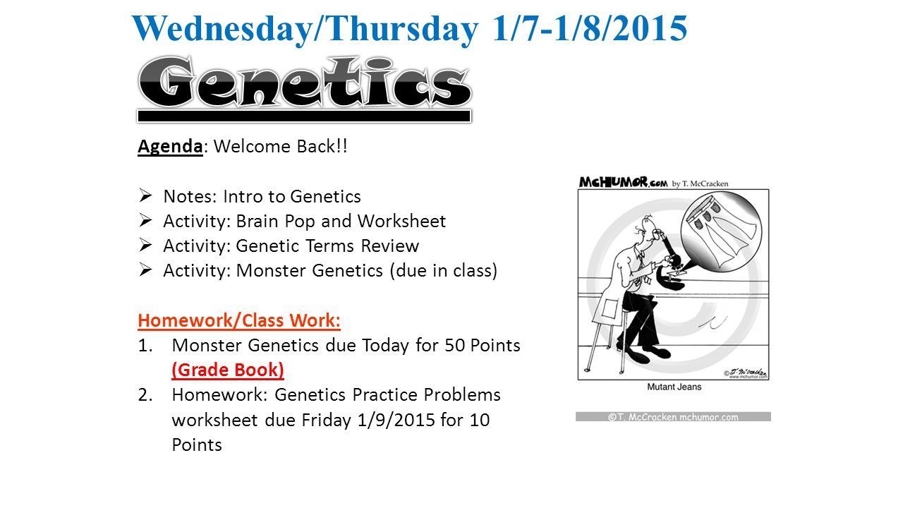 Worksheets Introduction To Genetics Worksheet wednesdaythursday 17 182015 agenda welcome back notes 1 wednesdaythursday