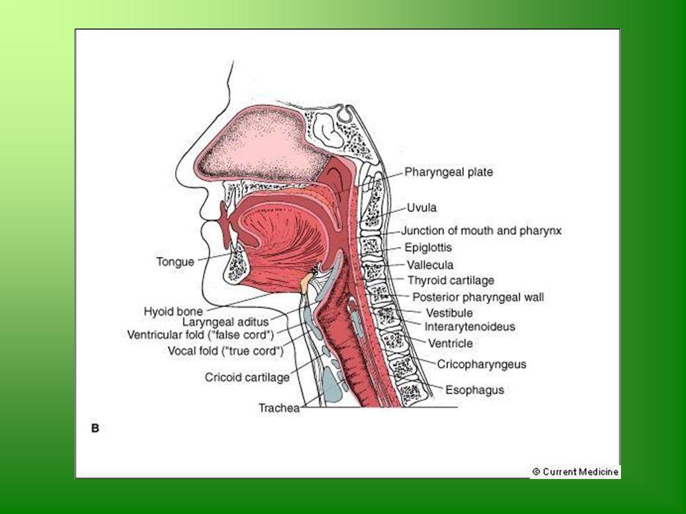 Lindsey Lorteau, M.S., SLP Speech-Language Pathologist - ppt video ...