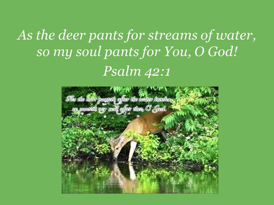 As the deer pants for streams of water, so my soul pants for You, O God! Psalm 42:1