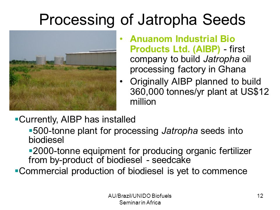 AU/Brazil/UNIDO Biofuels Seminar in Africa 12 Processing of Jatropha Seeds Anuanom Industrial Bio Products Ltd.