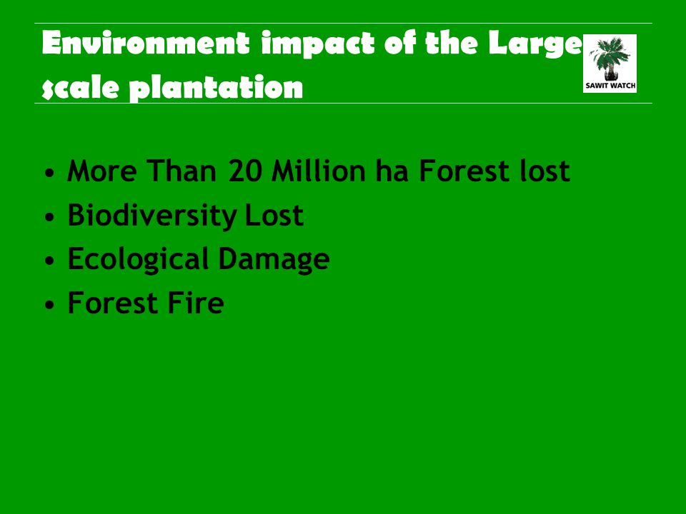 Environment impact of the Large scale plantation More Than 20 Million ha Forest lost Biodiversity Lost Ecological Damage Forest Fire