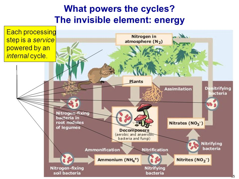 85 What powers the cycles.