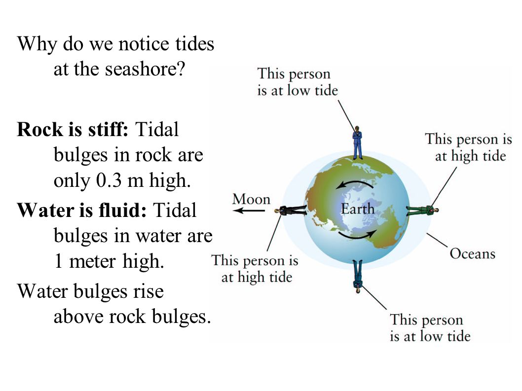 Why do we notice tides at the seashore. Rock is stiff: Tidal bulges in rock are only 0.3 m high.