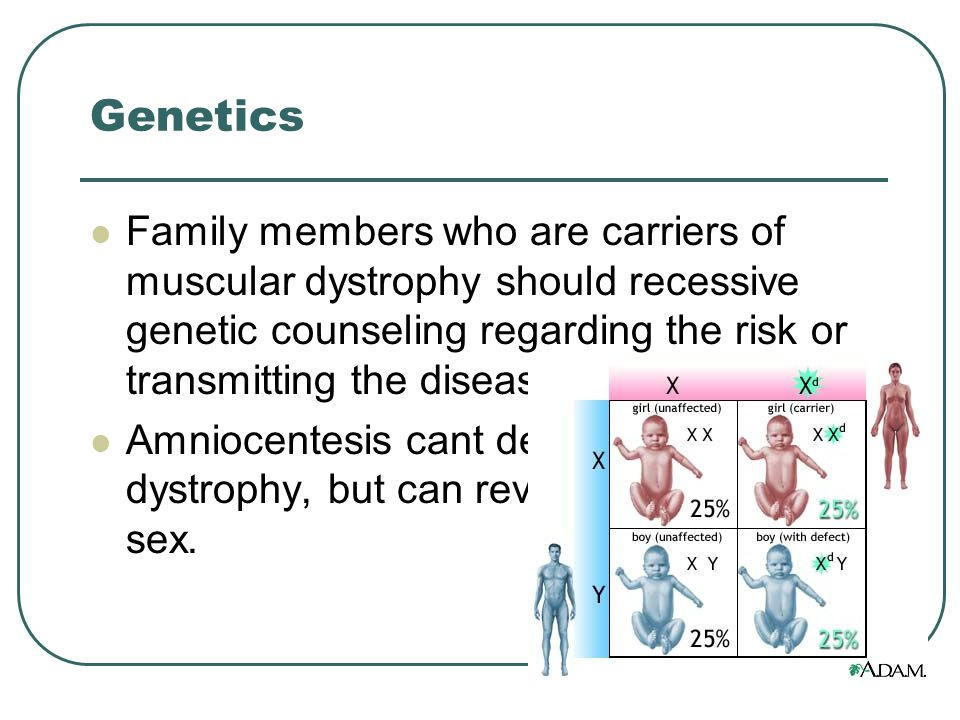 Genetics Family members who are carriers of muscular dystrophy should recessive genetic counseling regarding the risk or transmitting the disease Amniocentesis cant detect muscular dystrophy, but can reveal the fetuses sex.