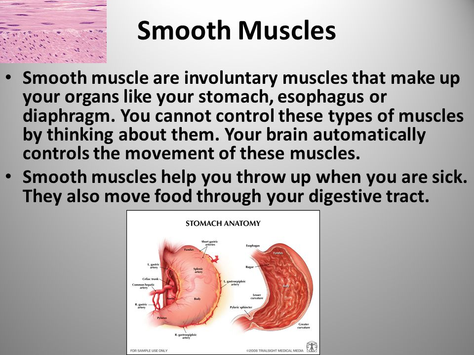 The Muscular System What Are The Parts Of The Muscular System There