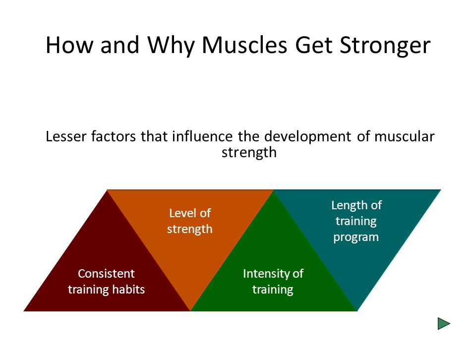 How and Why Muscles Get Stronger Lesser factors that influence the development of muscular strength Consistent training habits Level of strength Intensity of training Length of training program