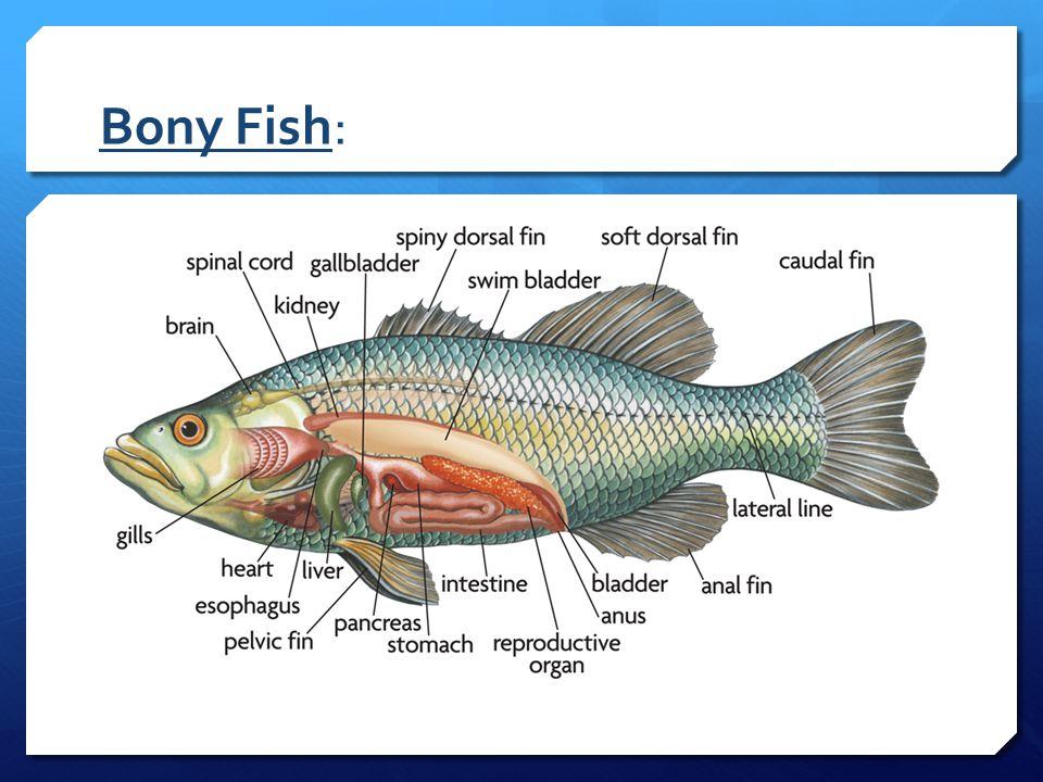 Fishes Of Libong Island