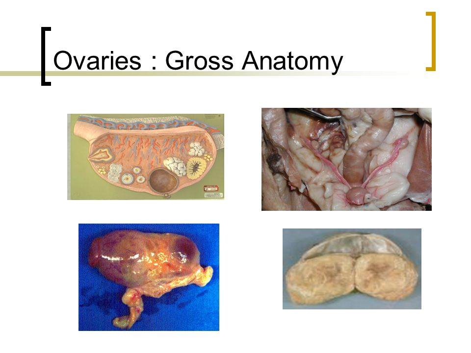 Female Reproduction Alterations. Female Reproductive Organs. - ppt ...