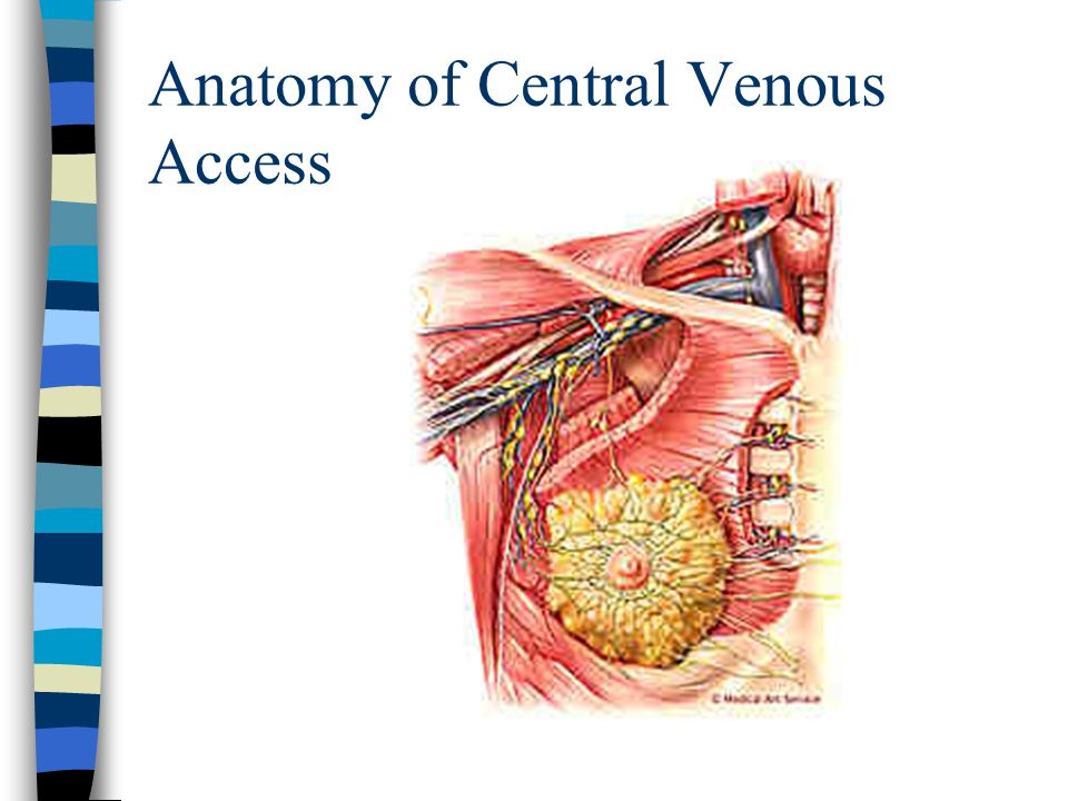 Central Venous Lines and Thoracic Drainage Division of ...