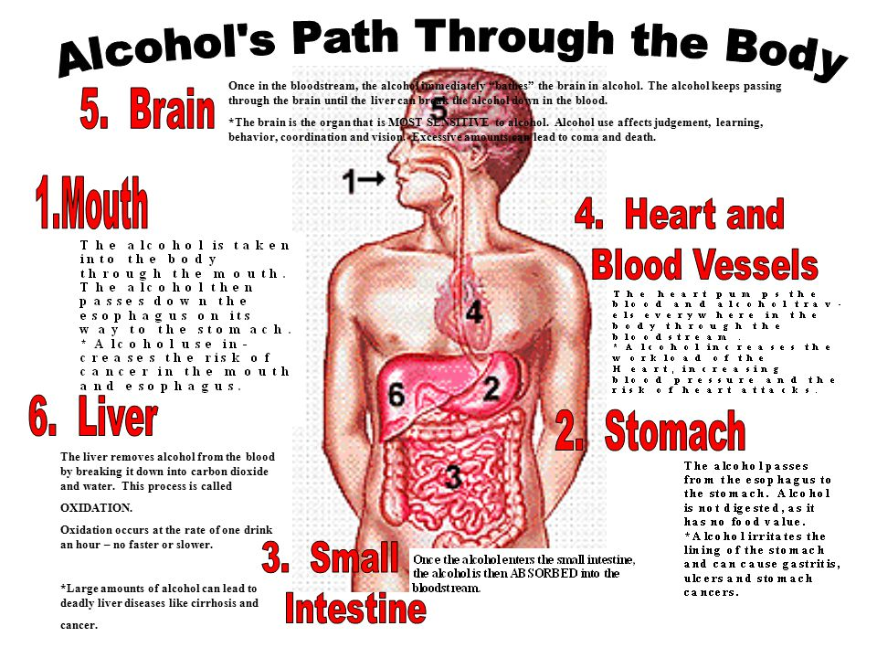 Once in the bloodstream, the alcohol immediately bathes the brain in alcohol.