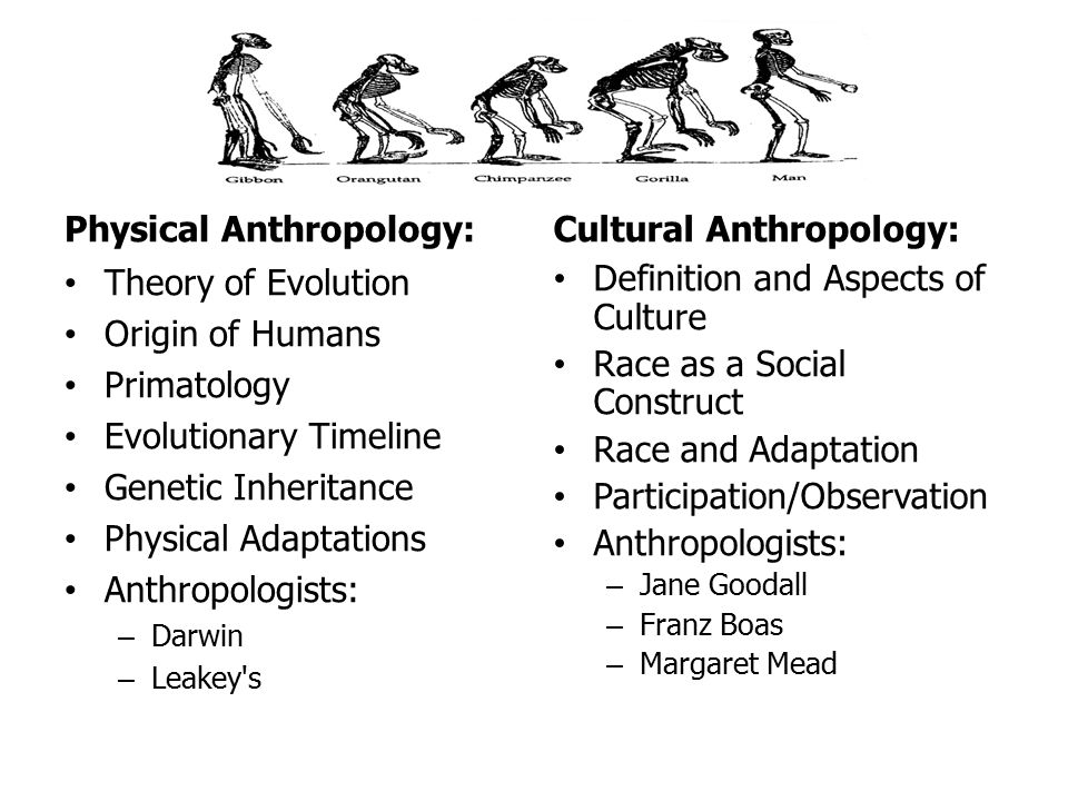 physical anthropology The physical anthropology minor introduces students to the study of human evolution, including human variation, paleontology, genetics, and primatology, the minor consists of 12 or more credits.