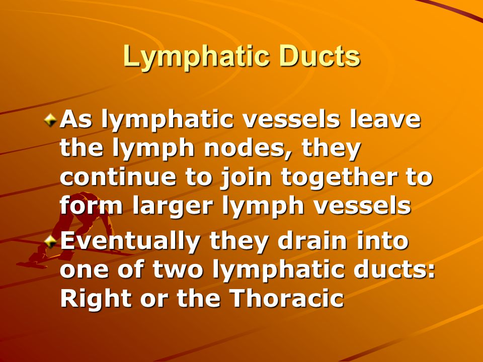 Lymphatic Ducts As lymphatic vessels leave the lymph nodes, they continue to join together to form larger lymph vessels Eventually they drain into one of two lymphatic ducts: Right or the Thoracic