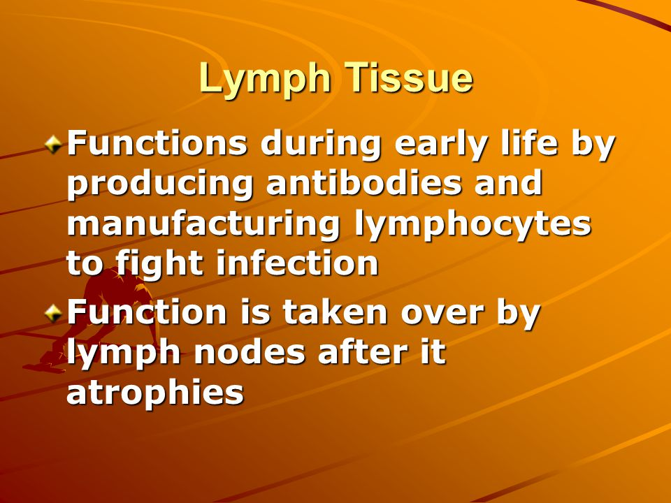 Lymph Tissue Functions during early life by producing antibodies and manufacturing lymphocytes to fight infection Function is taken over by lymph nodes after it atrophies