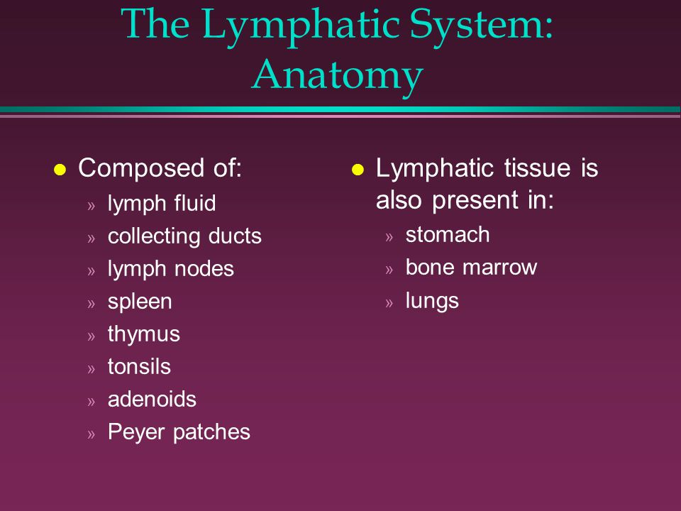 Examination of the Lymphatic System. The Lymphatic System: Function ...