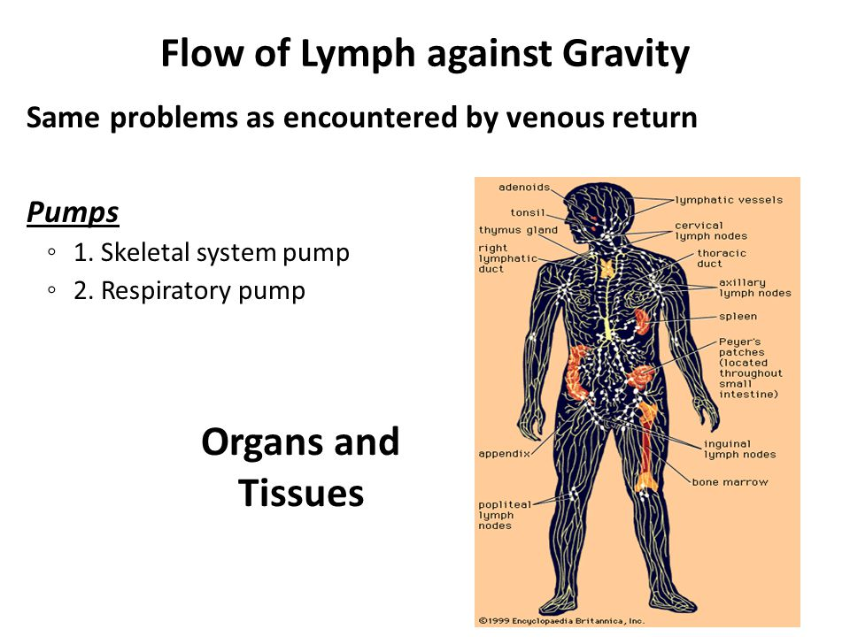 Flow of Lymph against Gravity Same problems as encountered by venous return Pumps ◦ 1.