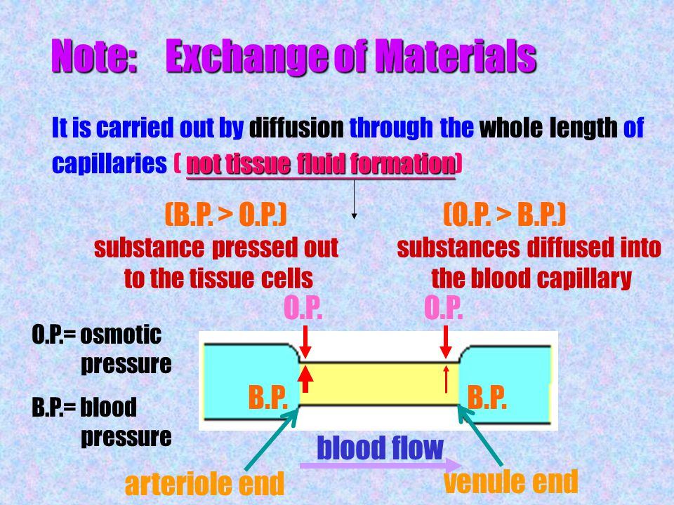 Transport of tissue fluid back into blood circulation Lymphatic system Lymphatic system