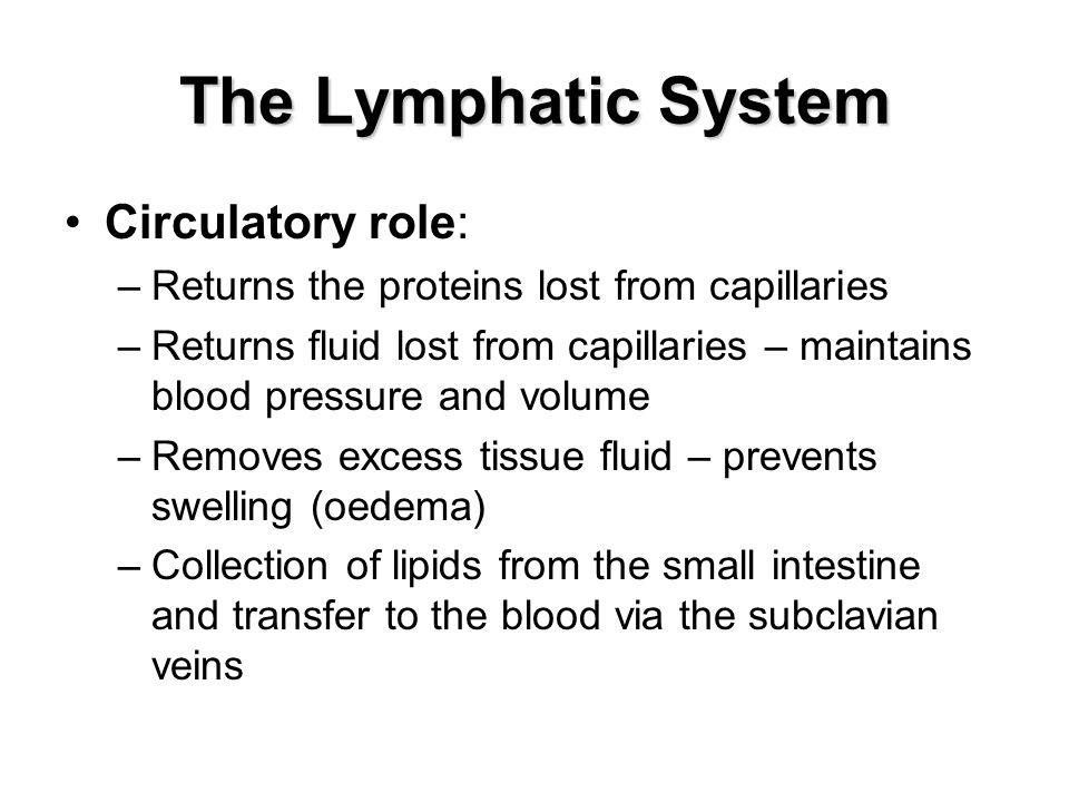 The Lymphatic System Circulatory role: –Returns the proteins lost from capillaries –Returns fluid lost from capillaries – maintains blood pressure and volume –Removes excess tissue fluid – prevents swelling (oedema) –Collection of lipids from the small intestine and transfer to the blood via the subclavian veins