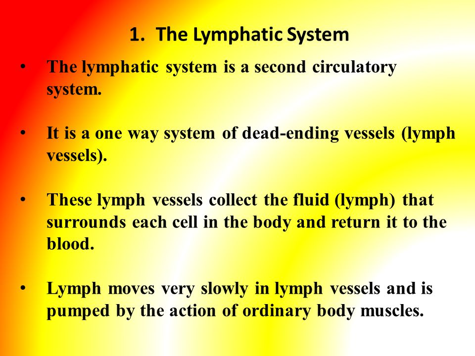 1.The Lymphatic System The lymphatic system is a second circulatory system.