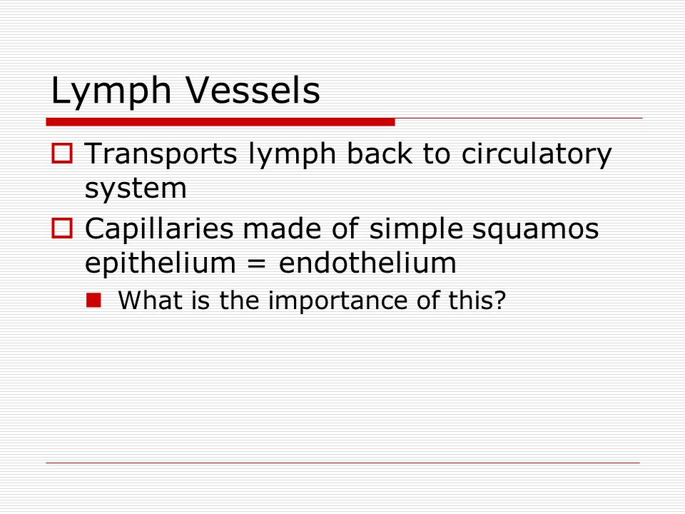Lymph Vessels  Transports lymph back to circulatory system  Capillaries made of simple squamos epithelium = endothelium What is the importance of this