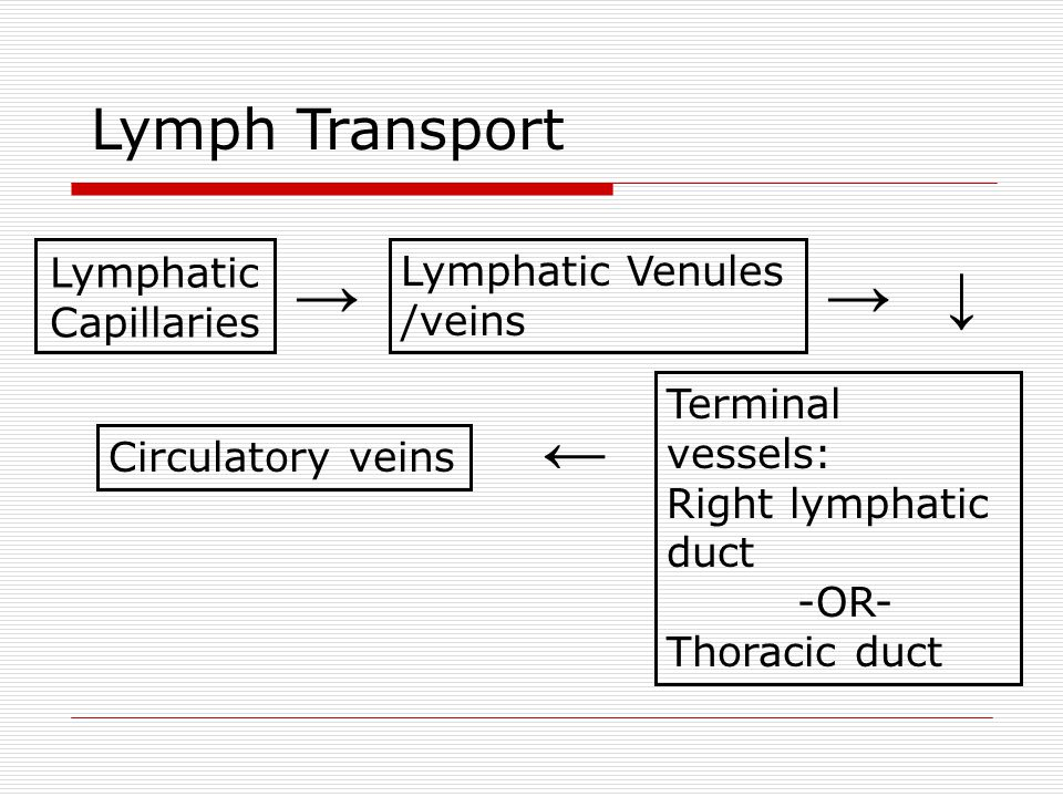 Lymphatic Capillaries → Lymphatic Venules /veins → ↓ Terminal vessels: Right lymphatic duct -OR- Thoracic duct ← Circulatory veins Lymph Transport