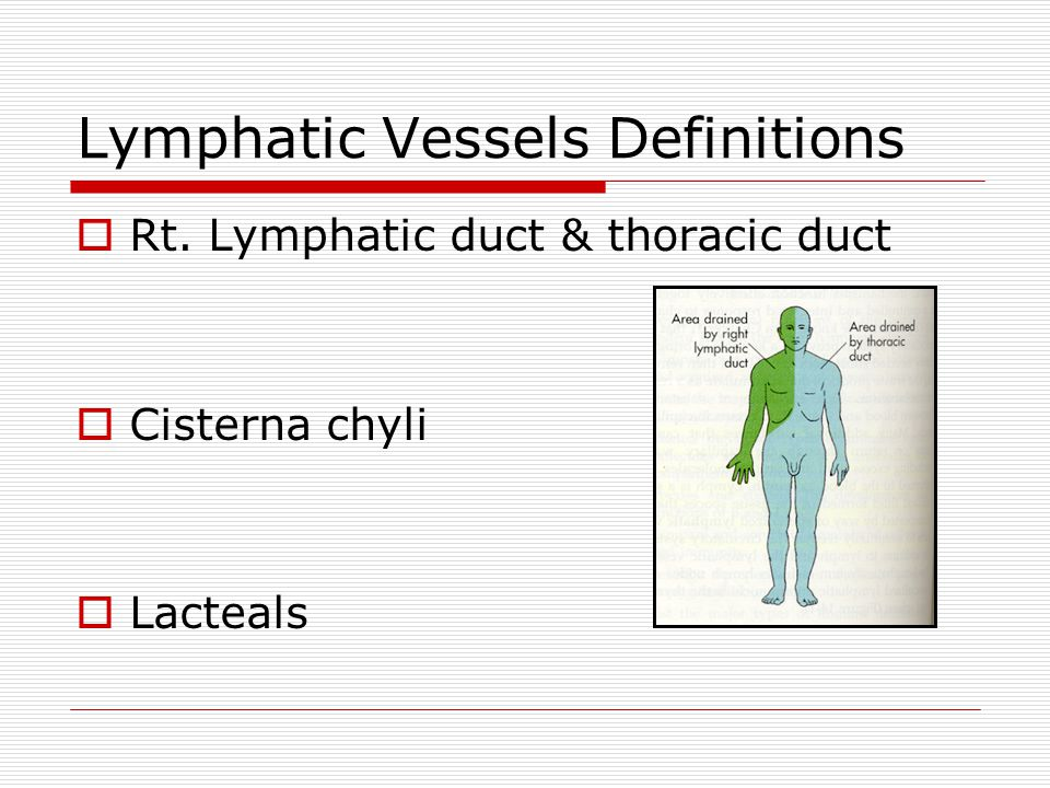 Lymphatic Vessels Definitions  Rt. Lymphatic duct & thoracic duct  Cisterna chyli  Lacteals