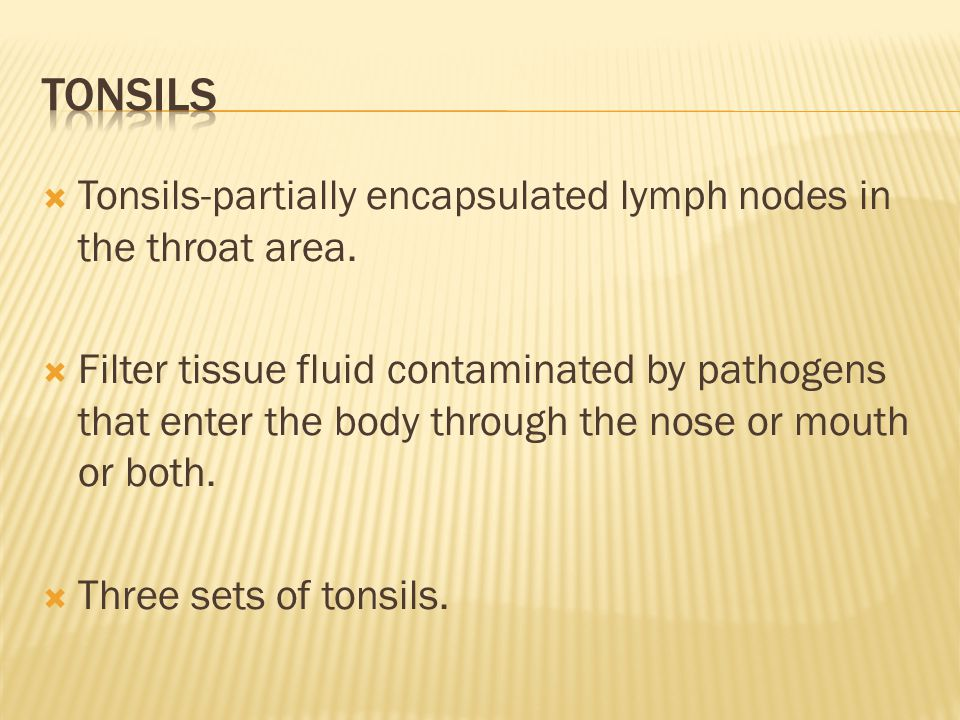  Tonsils-partially encapsulated lymph nodes in the throat area.