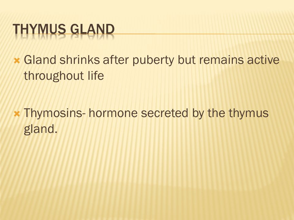  Gland shrinks after puberty but remains active throughout life  Thymosins- hormone secreted by the thymus gland.