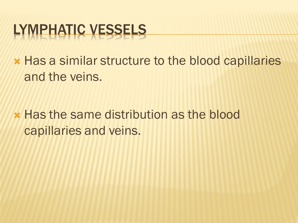  Has a similar structure to the blood capillaries and the veins.