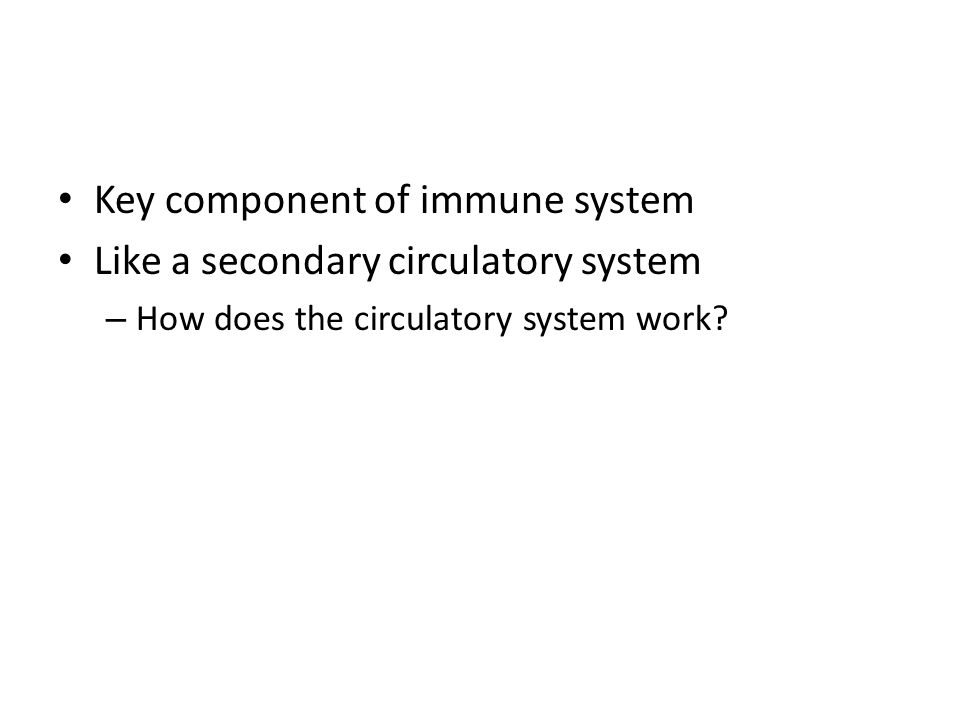 Key component of immune system Like a secondary circulatory system – How does the circulatory system work