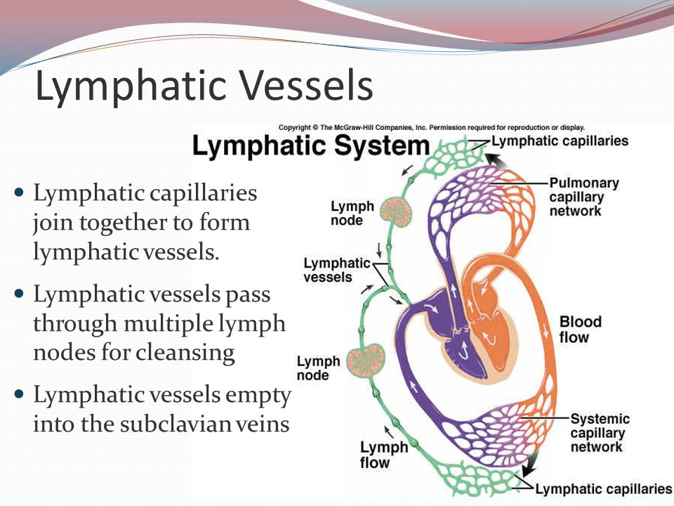 Lymphatic Vessels Lymphatic capillaries join together to form lymphatic vessels.