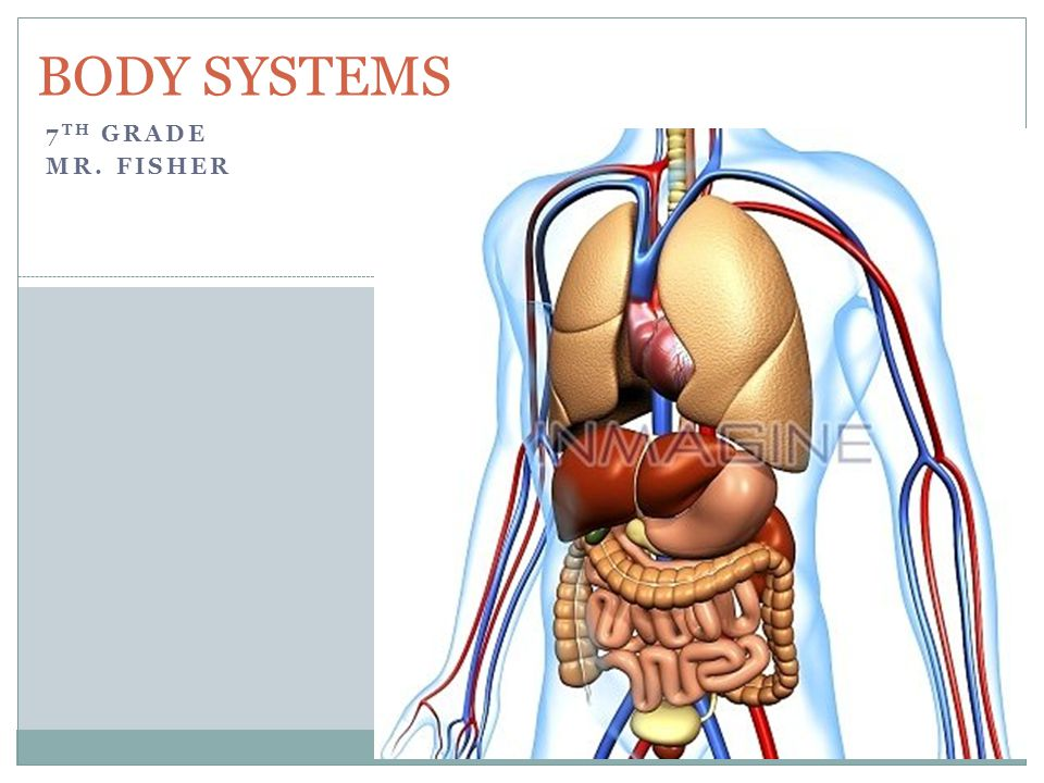7 TH GRADE MR. FISHER BODY SYSTEMS. Body Systems (11) Nervous System ...