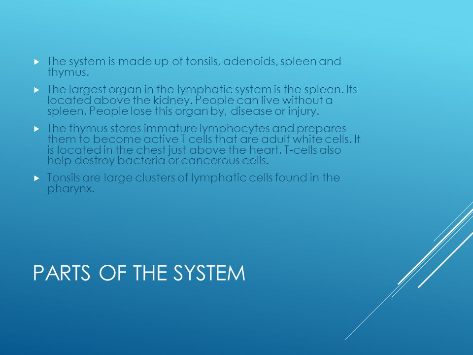 PARTS OF THE SYSTEM  The system is made up of tonsils, adenoids, spleen and thymus.