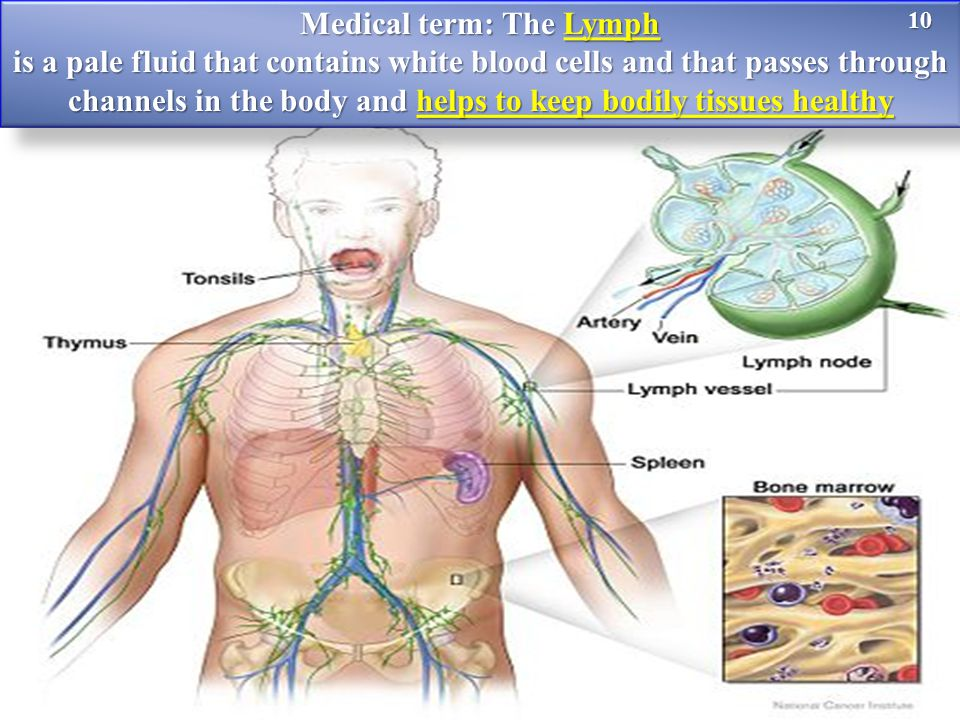 Medical term: The Lymph is a pale fluid that contains white blood cells and that passes through channels in the body and helps to keep bodily tissues healthy 10