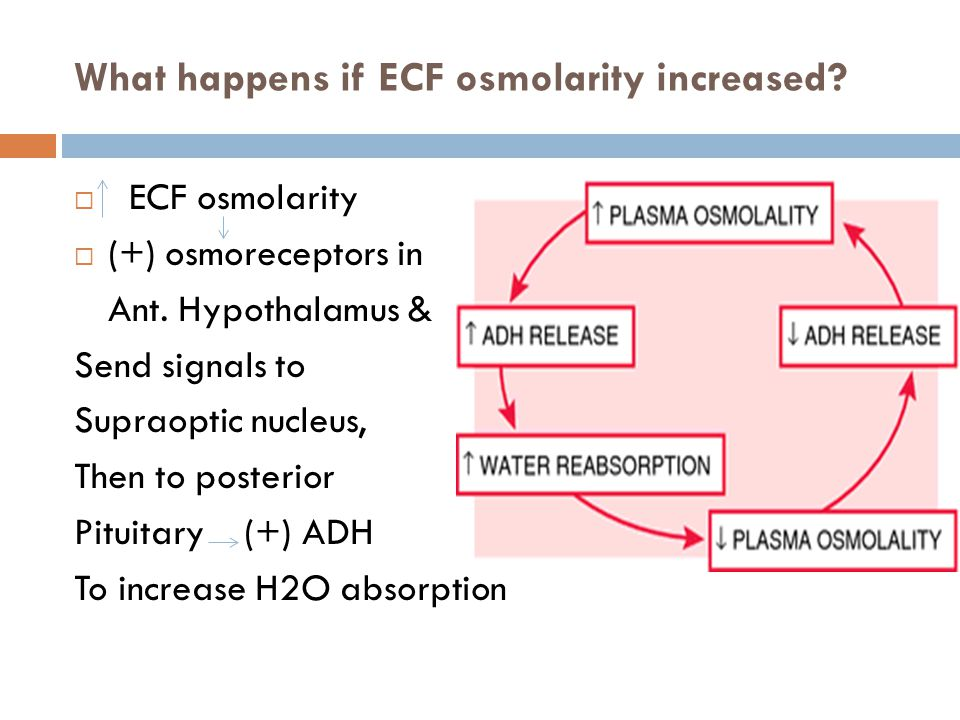 What happens if ECF osmolarity increased.  ECF osmolarity  (+) osmoreceptors in Ant.