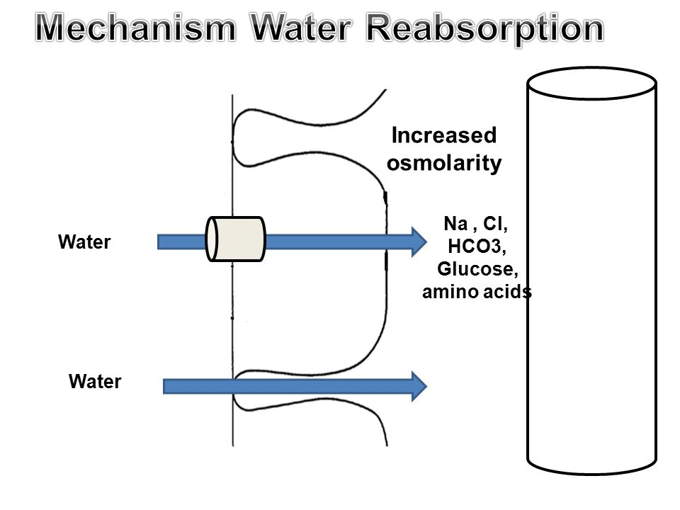 Water Na, Cl, HCO3, Glucose, amino acids Increased osmolarity Water