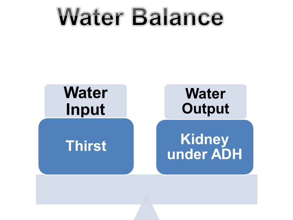 Water Input Water Output Thirst Kidney under ADH