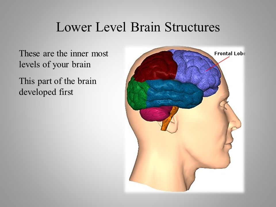 These are the inner most levels of your brain This part of the brain developed first