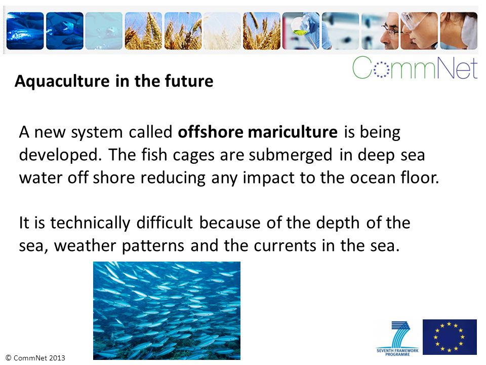 © CommNet 2013 Aquaculture in the future A new system called offshore mariculture is being developed.