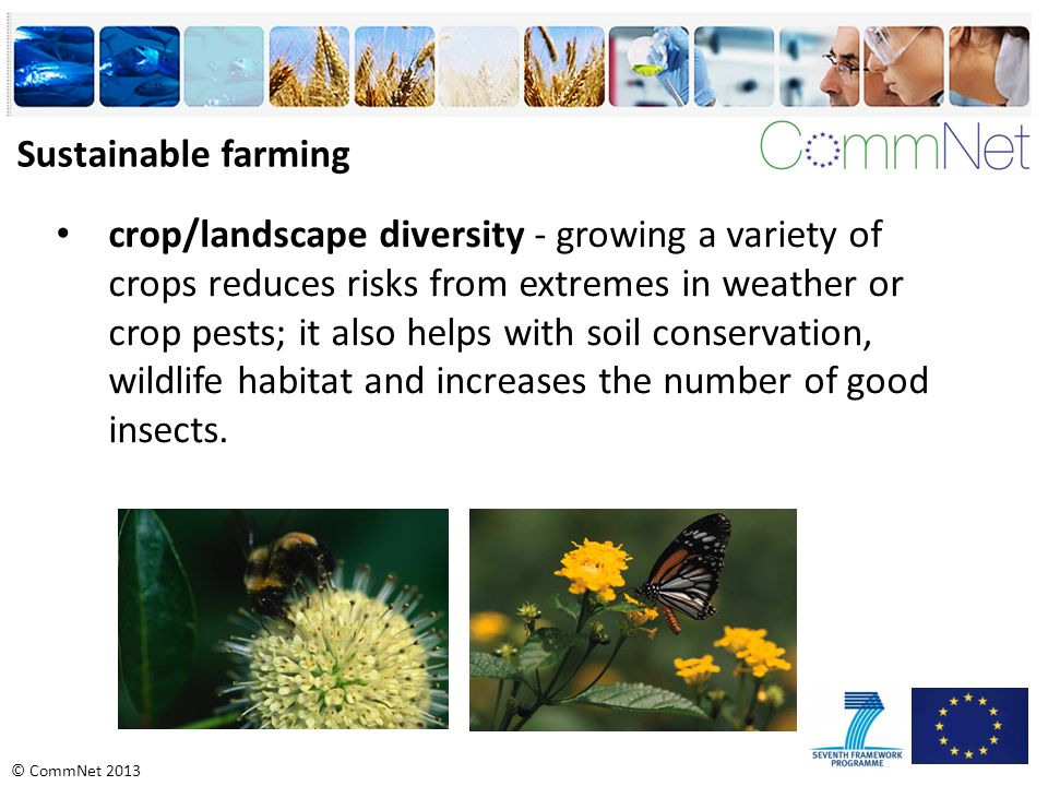 © CommNet 2013 crop/landscape diversity - growing a variety of crops reduces risks from extremes in weather or crop pests; it also helps with soil conservation, wildlife habitat and increases the number of good insects.