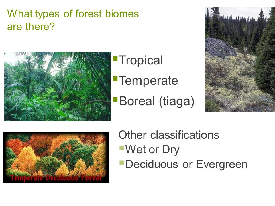 types of forest biomes