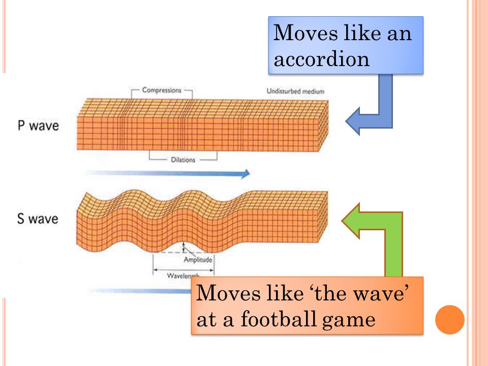 Moves like an accordion Moves like 'the wave' at a football game